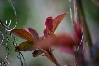 plants colors