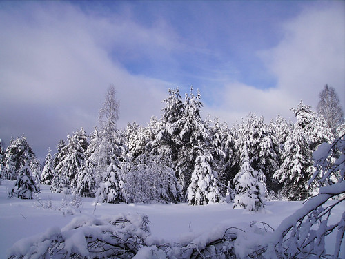 trees winter snow nature landscapes