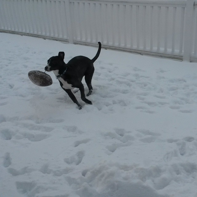 If there are two things she loves most, it's snow and her football. #IndieJohnson