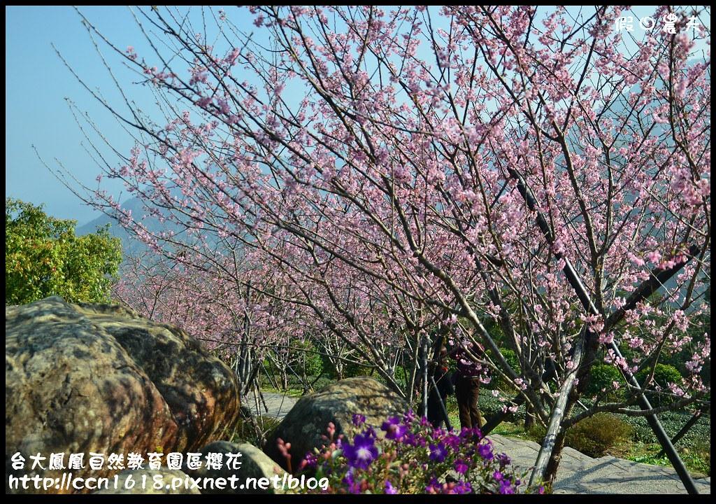 台大鳳凰自然教育園區櫻花DSC_6087
