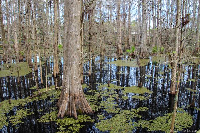 Wild Florida Orlando-54