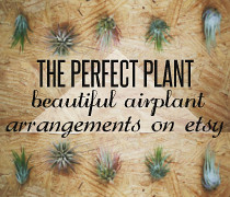 plantb