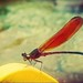 Some moment we  wanna forget,is the moment who hard to forgotten...Lonely dragonfly !