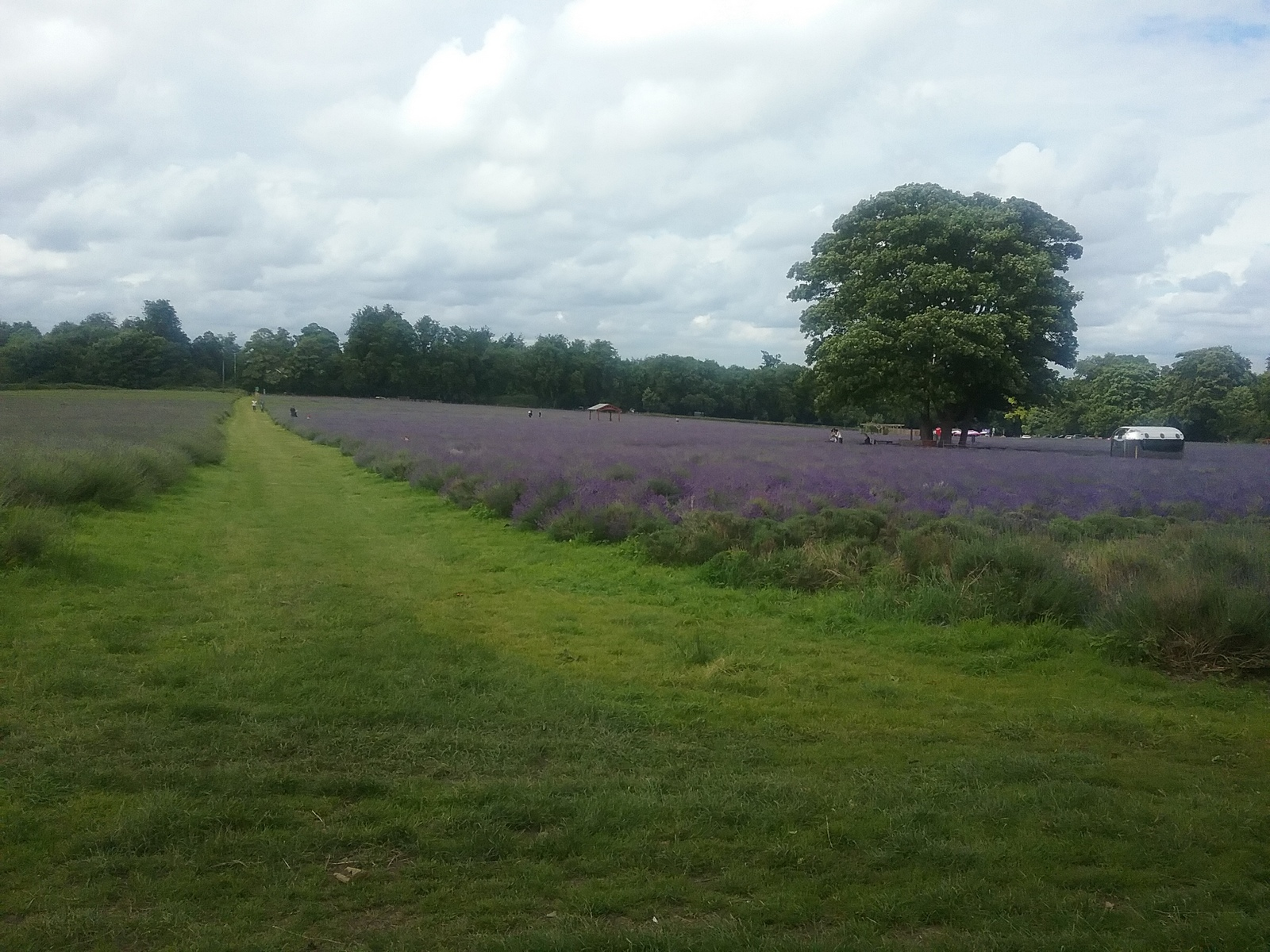 20160630_161602 Public footpath across Mayfield Farm lavender fields