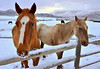 Colorado Horse Farm