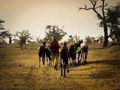 Une courte promenade au Sénégal