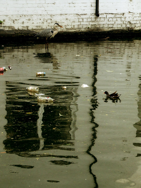 canal egret 3