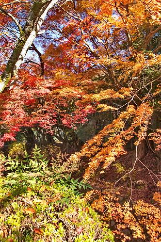 【写真】2012 紅葉 : 哲学の道/2020-10-03/IMGP7390
