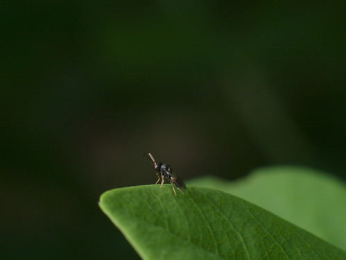 lonely bug