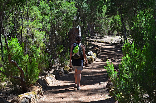 Walking in the Pine Forest, La Orotava Valley, Tenerife
