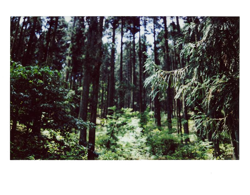 Walking stick,Fujufilm Instax, duration 12 hours, 2013