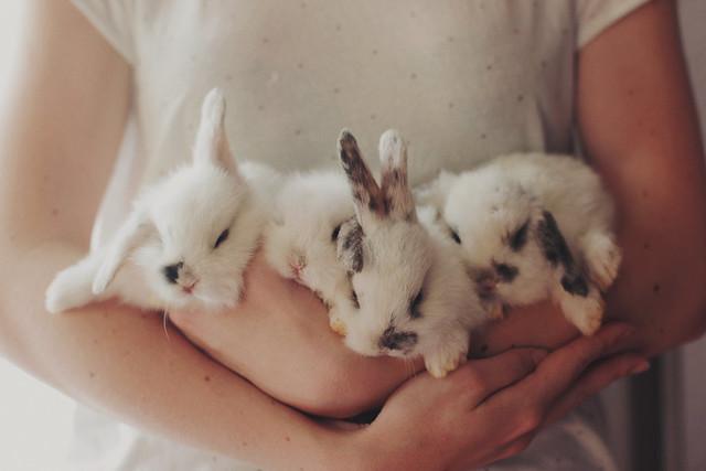 Bonjour bunnies