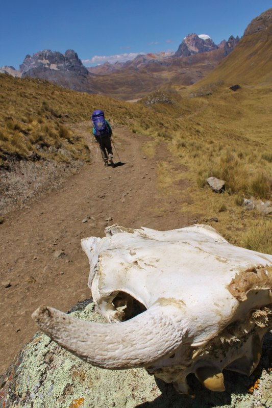 Gazing at another trekker descending to Viconga