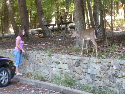 Redneck Feeding Deer