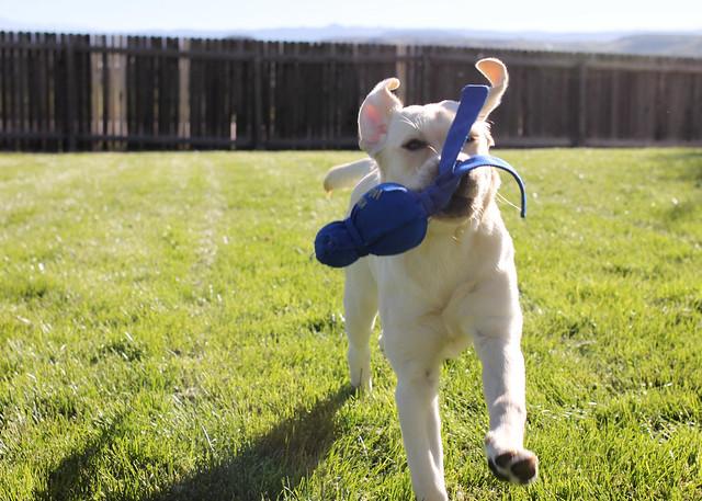 Fetch fetch fetch