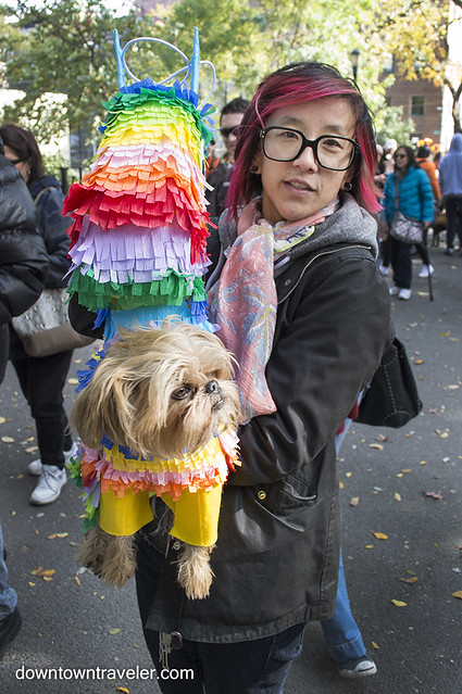 Halloween Dog Costume_Pinata_Hanso the Brussels Griffon 2