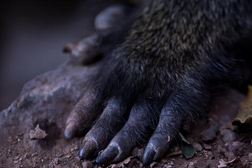 park lake tanzania hand national baboon manyara