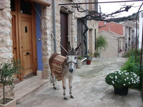 Burro en Casa Rural Ca Ferminet La Vall de Galllinera
