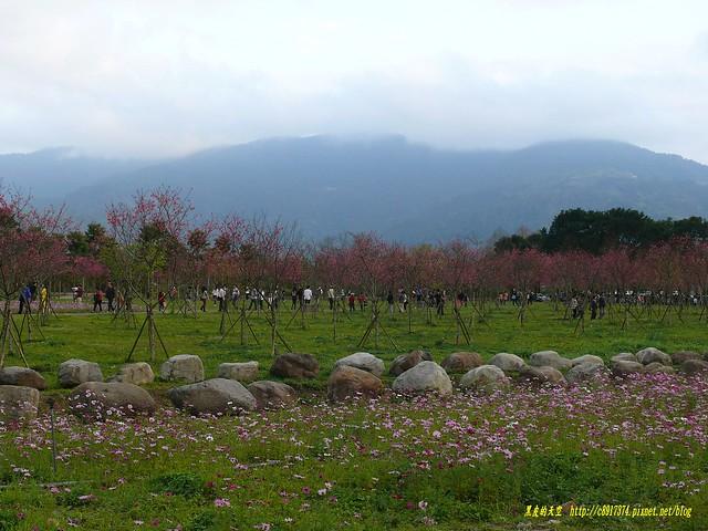 2014 0202宜蘭大同冬戀櫻花祭001
