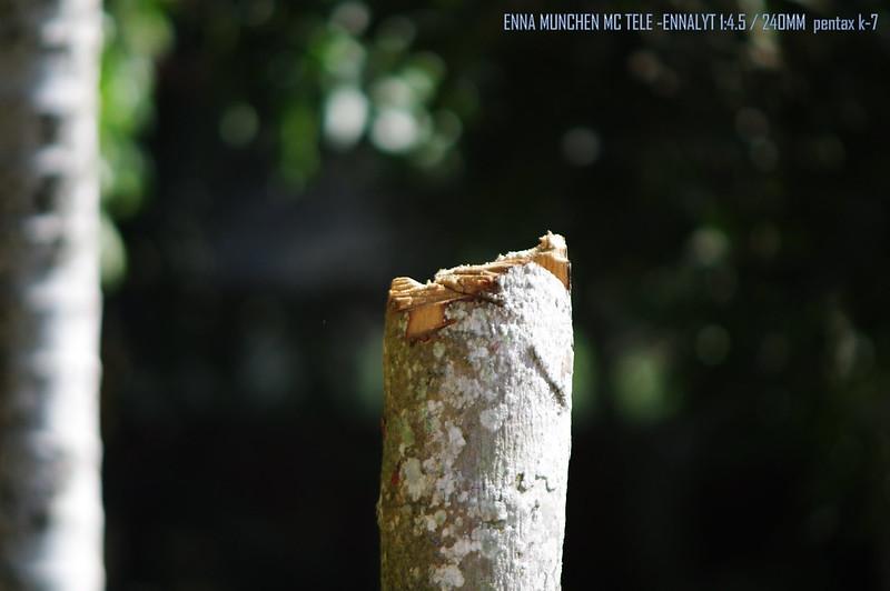 ENNA MUNCHEN MC TELE -ENNALYT 1:4.5 / 240MM 各級光圈試拍