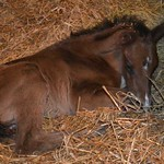 2014 Neytiri colt by Rock Slide