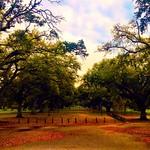 Tulane's beautiful front yard, Audubon Park! #tulane #audubonpark #onlyinneworleans #onlyattulane #nola