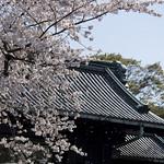 0404_chiyoda-32