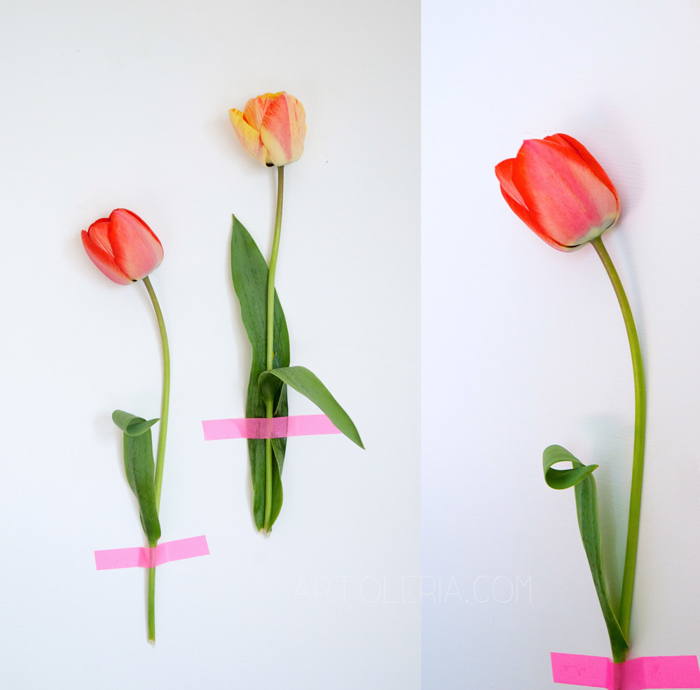 tulipani a muro