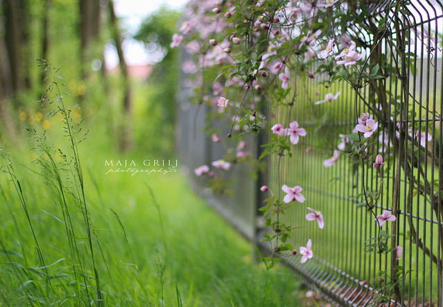 f/1.8 project ~Flower fence~