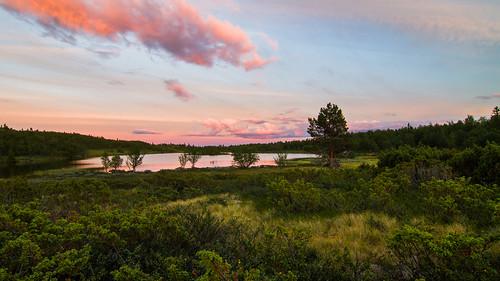 pink sunset lake grass clouds landscape vann skyer solnedgang einer pinussylvestris scotspine buskerud junipers juniperuscommunis commonjuniper såtefjell einebærbusk midtredjupetjørn