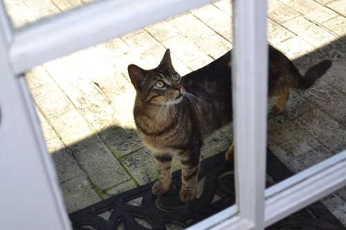 Cat outside patio door