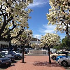 Spring at Malaga Cove Plaza