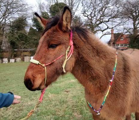 Mule's new bling