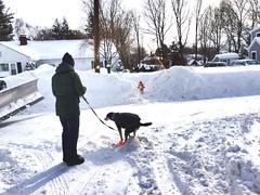 winter sport(0.0), sledding(0.0), blizzard(0.0), nordic skiing(0.0), sled(0.0), snowshoe(1.0), footwear(1.0), winter(1.0), snow(1.0), pet(1.0),