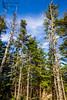 Quoddy State Park - Maine