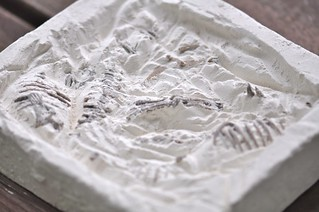 Dinosaur Excavation Plaster