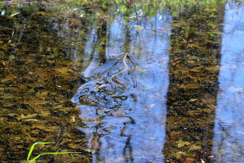swimmy snake