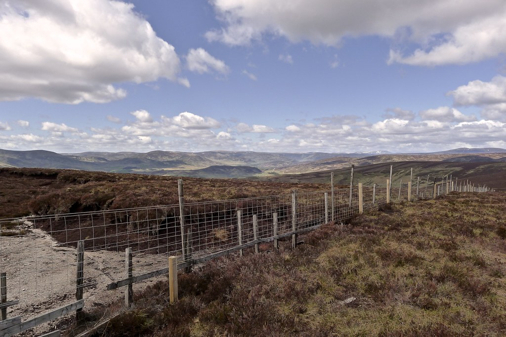 New fencing on Craigangowan
