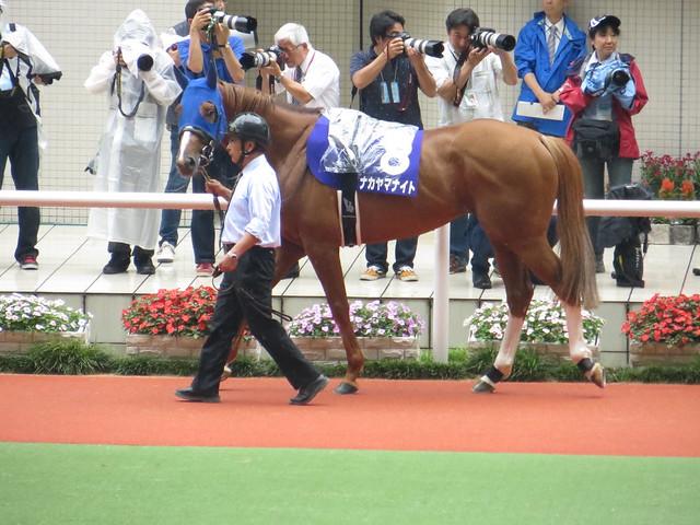 08 Nakayama Knight (June 23, 2013. 54th Takarazuka Kinen)