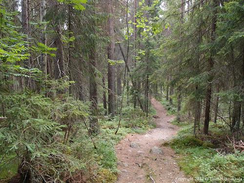 nature walking nationalpark path olympus kansallispuisto helvetinjärvi helvetinjärvenkansallispuisto xz1