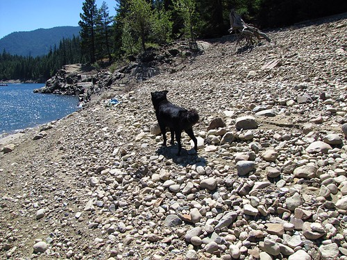 cub on a rocky beach