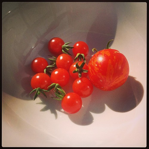 First tomato harvest of the year!