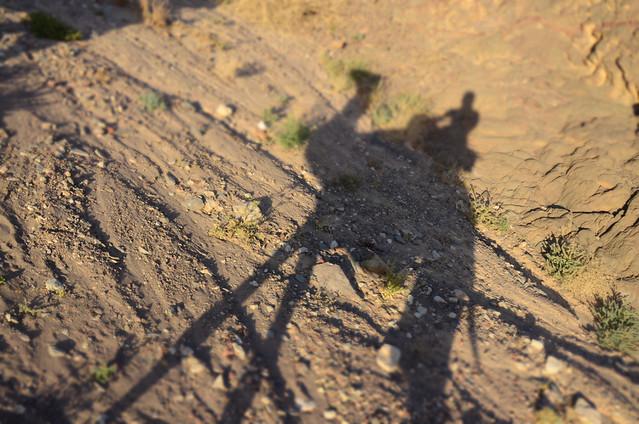 Sombra de un camello