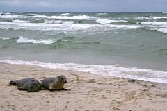 Goodbye little seals!