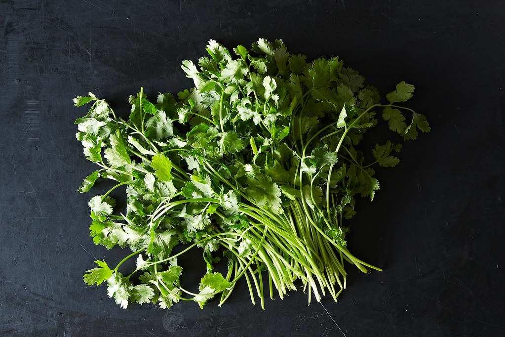 how to store cut cilantro