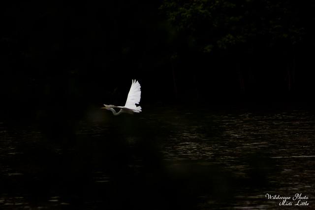egret5