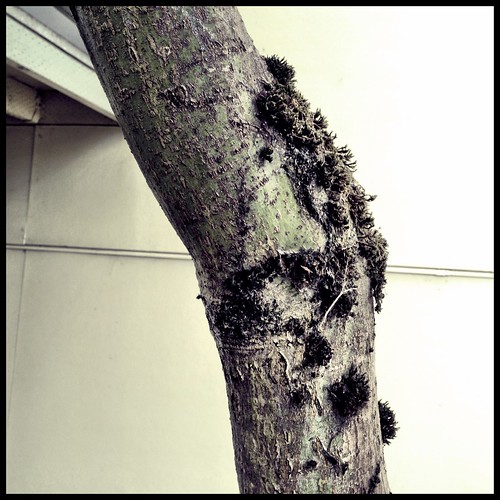 officetree by Nature Morte