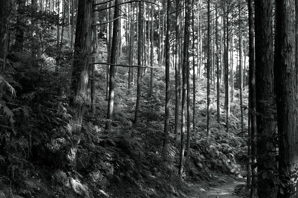 中辺路(なかへち)|熊野古道