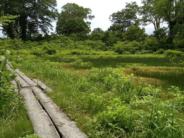 籾糠山 木平湿原
