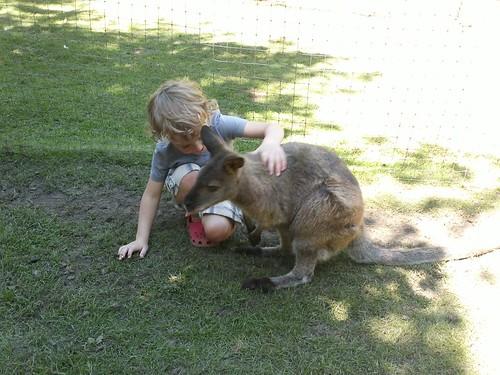 kangaroo cuddles